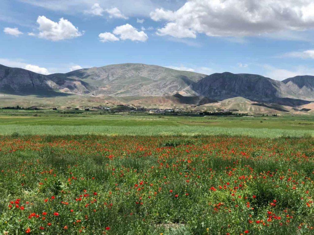 روستای گیفان دشت شقایق