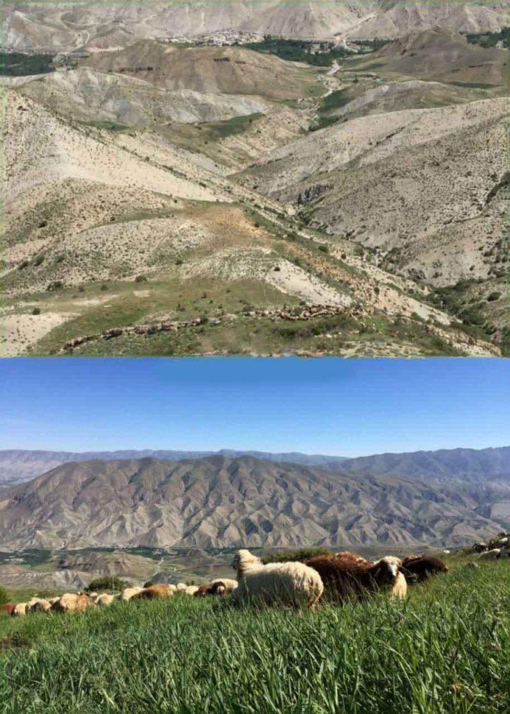 روستای محمد دورانلو چریدن گوسفند