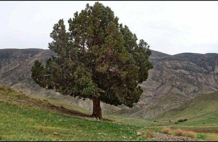 معرفی روستای بی بهره یا بیواره در شهر شیروان