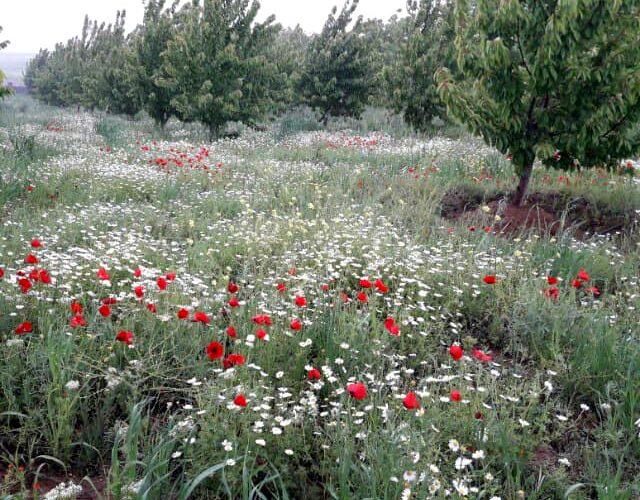 روستای هیبت آباد یا سید اسماعیل