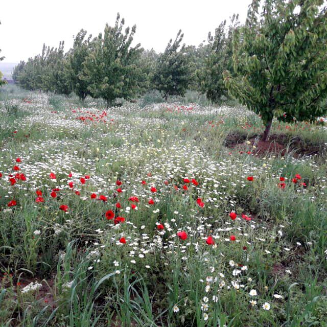 روستای هیبت آباد